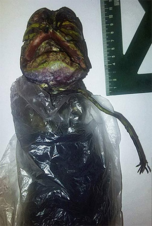 Alleged Alien Corpse